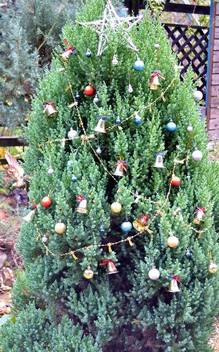 11,30クリスマスツリー