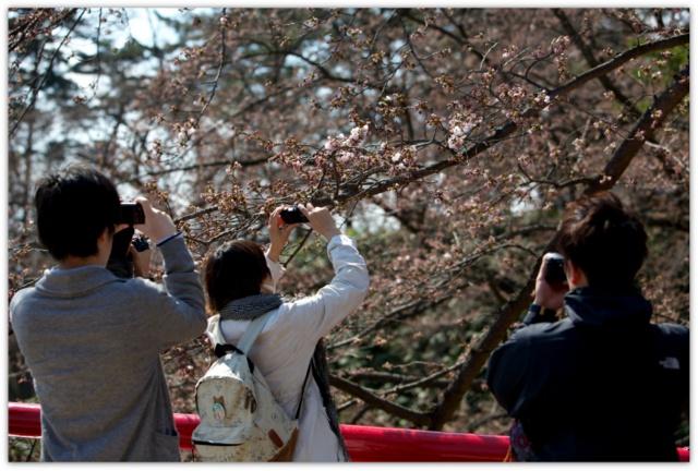 弘前公園 弘前さくらまつり