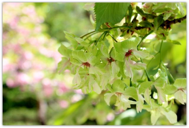 弘前公園 弘前城植物園