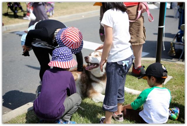 犬 いぬ イヌ ドッグ DOG