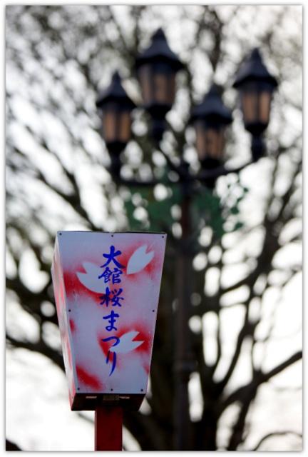 大館桜まつり 桂城公園 秋田犬