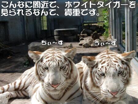 02_20131006155438f58.jpg