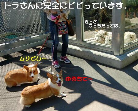 05_201310092051072bd.jpg
