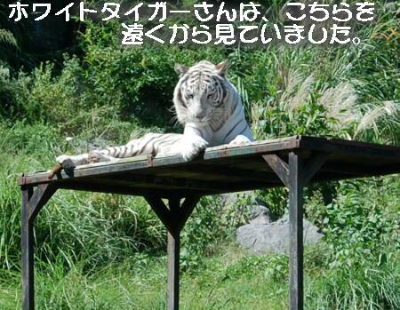 07_20131006153847f55.jpg