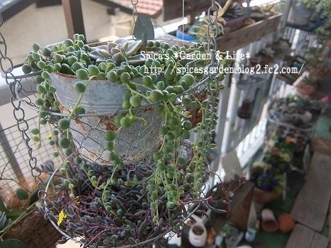 2014/1/22 多肉植物