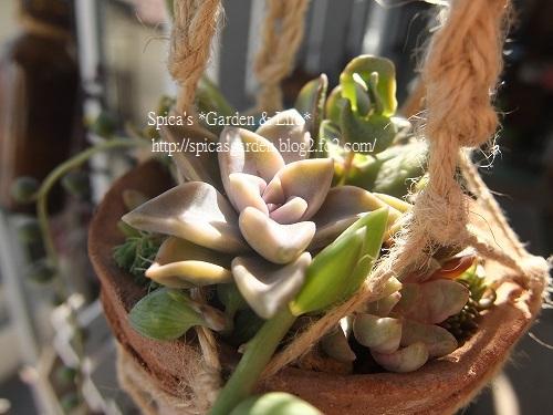 2014/1/27 多肉植物