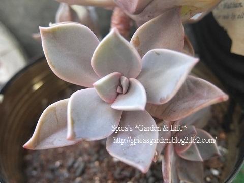 2014/1/29 多肉植物
