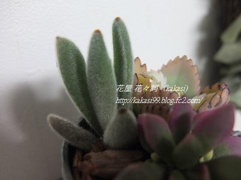 2014/1/30 花々詞