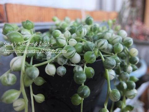 2014/2/2 多肉植物
