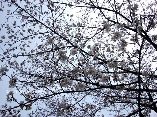fc2_159_3.jpg