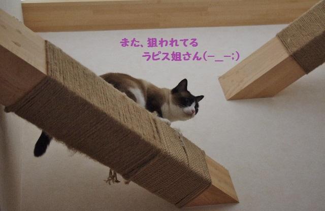 NNIMGP9279.jpg