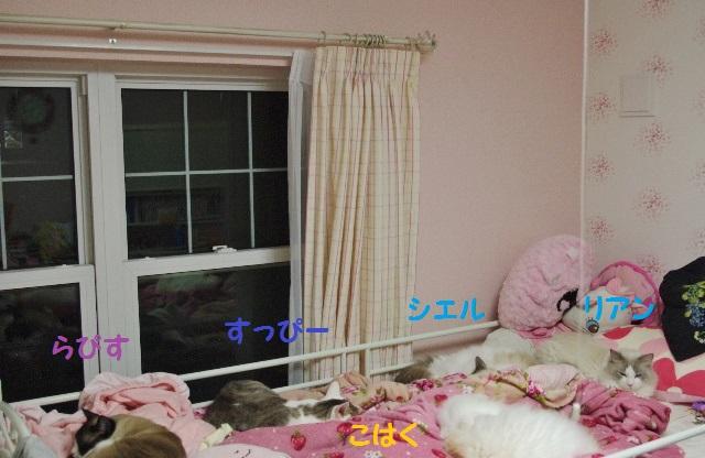 NNIMGP9556.jpg