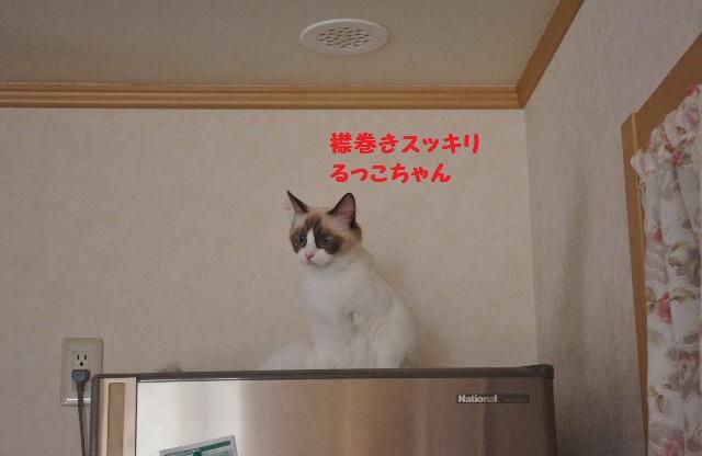 NNIMGP9933.jpg