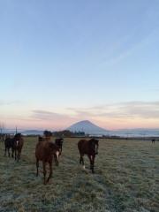 20141024 早朝のレイクヴィラファーム&羊蹄山