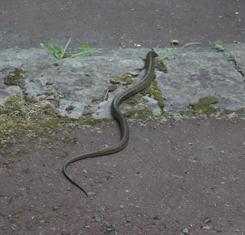 ヘビ、みーっけ!