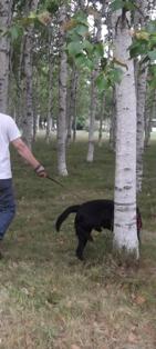 林の中をお散歩