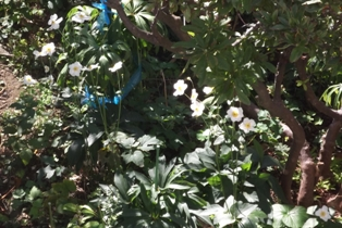 庭のお花も
