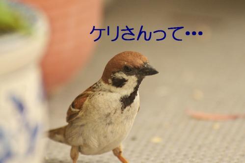 010_20130531213724.jpg
