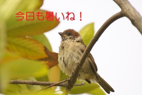 010_20130617213214.jpg