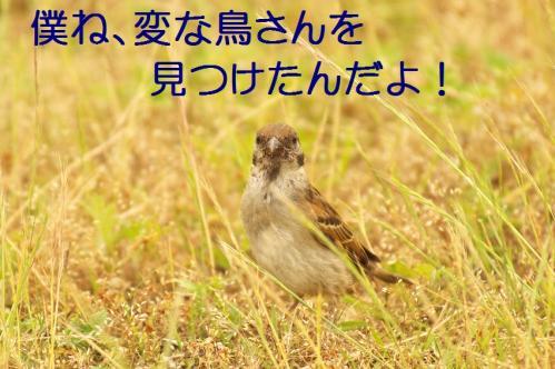020_20130616224324.jpg