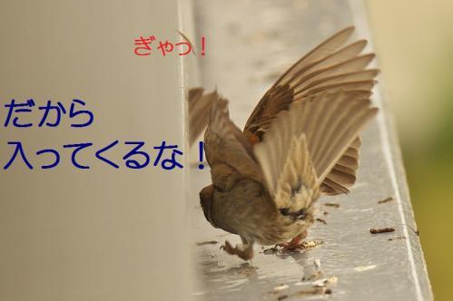 020_201307312219439db.jpg