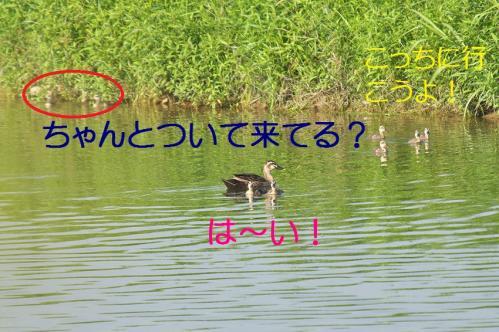 020_20130801020114493.jpg