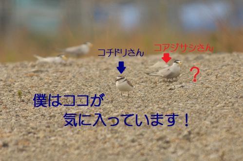 030_20130617213221.jpg