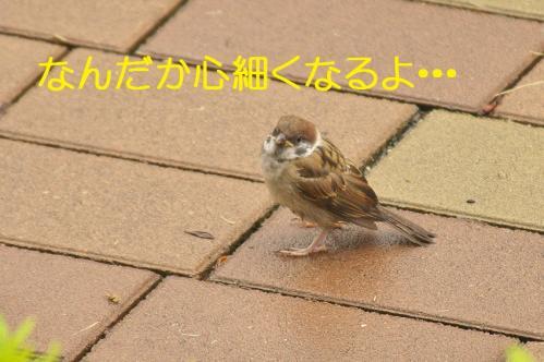 030_20130630200129.jpg