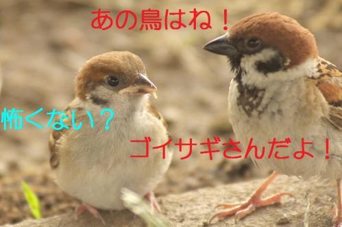 030_20130709201811.jpg