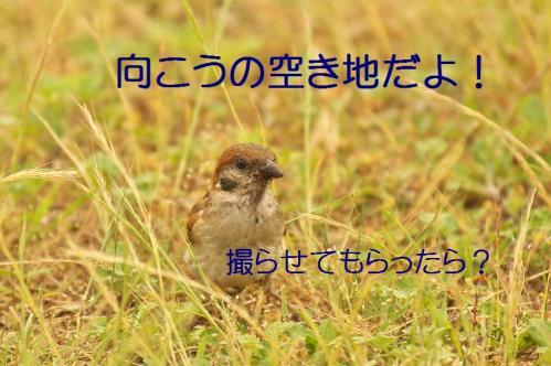 040_20130616224332.jpg