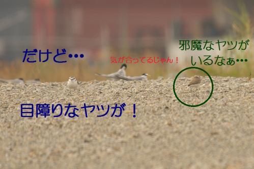 040_20130617213224.jpg