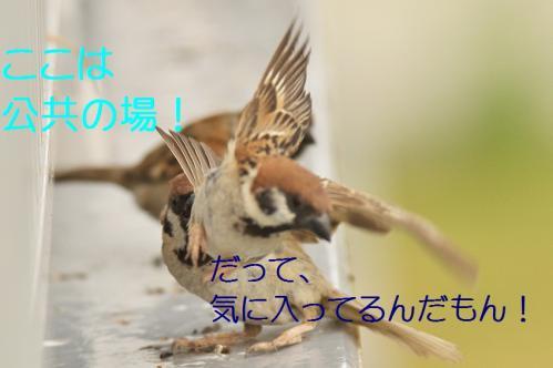 040_20130731221949ac9.jpg