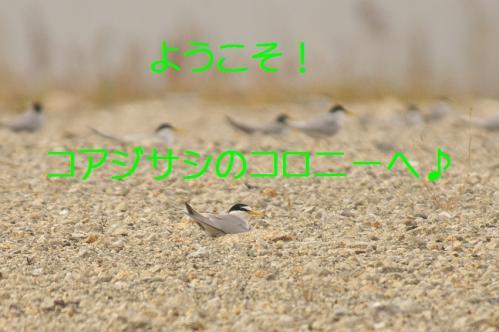 047_20130616224449.jpg