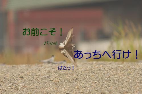 050_20130617213227.jpg