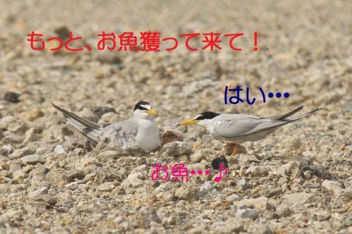 050_20130628214550.jpg