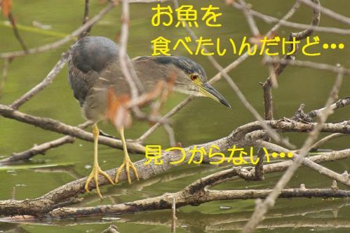 050_20130709201819.jpg