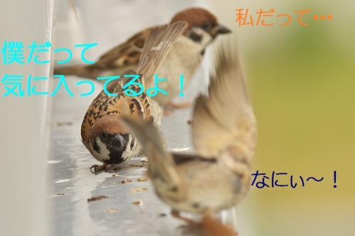 050_20130731221953315.jpg