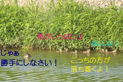 050_20130801020130d50.jpg