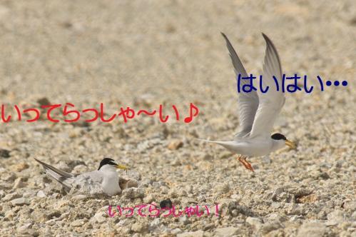 060_20130628214843.jpg
