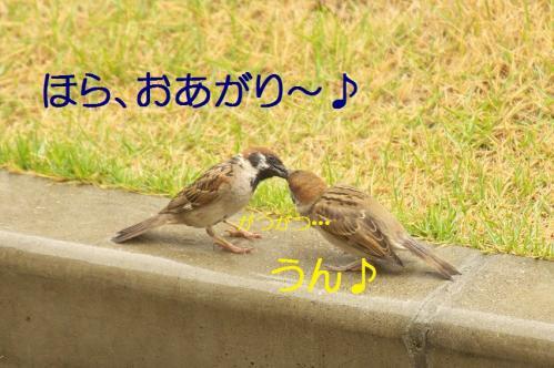 060_20130630200219.jpg