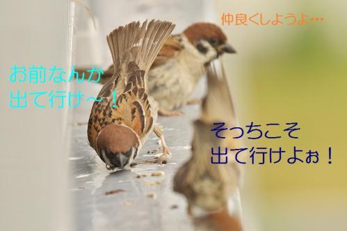 060_20130731222111a5f.jpg