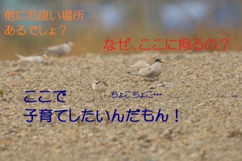 070_20130617213547.jpg