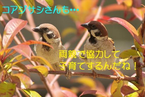 070_20130628214847.jpg