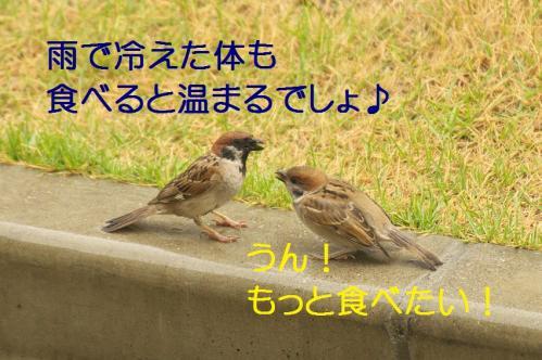 070_20130630200223.jpg