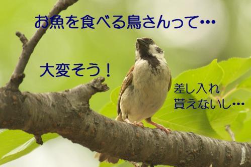 070_20130709201906.jpg