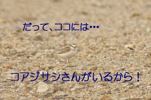 075_20130617213550.jpg