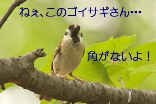 075_20130709201910.jpg