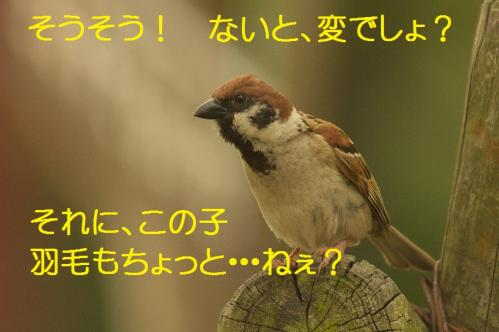 085_20130709201918.jpg