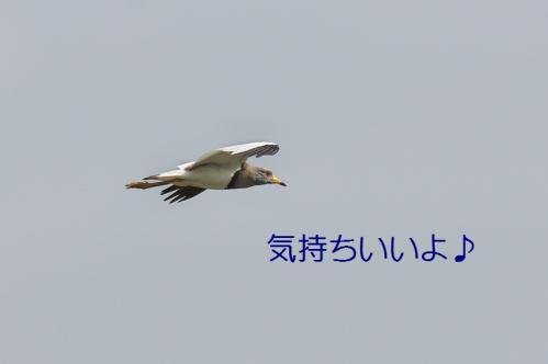 100_20130531213835.jpg