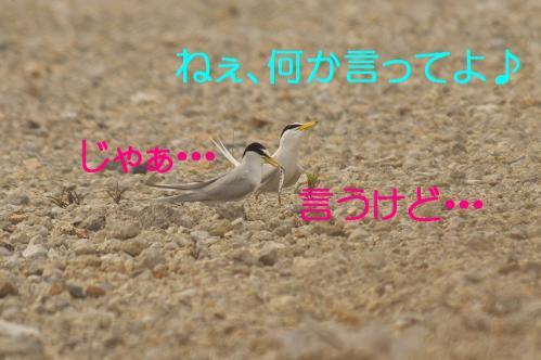 100_20130616224648.jpg